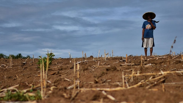 Dry Spell Hits Agriculture In Restive Southern Philippines