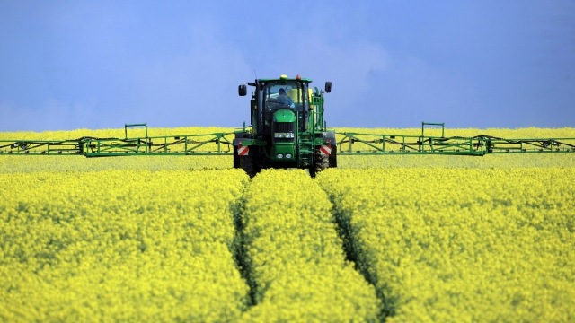 Rapeseed Blooms Across The UK