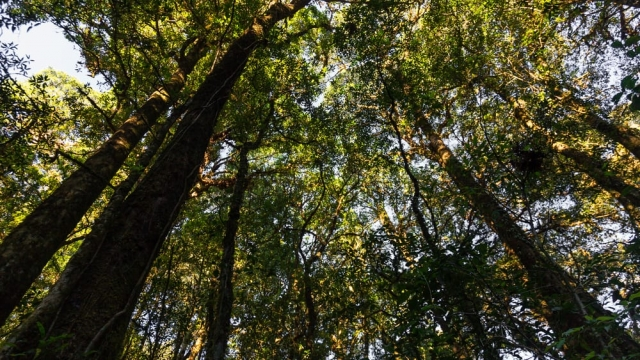 Reforestation is needed to meet global warming targets (Photo: Shutterstock)