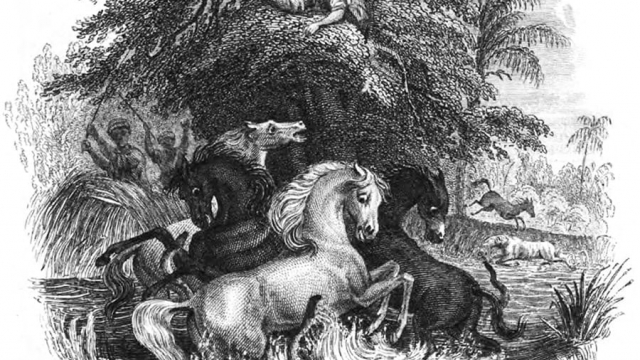 A illustration of Humboldt's encounter with electric eels in the Amazon with horses