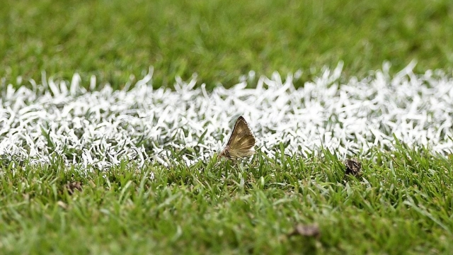 A moth on the pitch at the Stade de France (Photo: Getty)