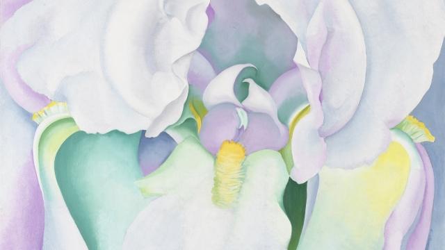 Georgia O'Keefe's 'White Iris' Photo: Katherine Wetzel © Virginia Museum of Fine Arts