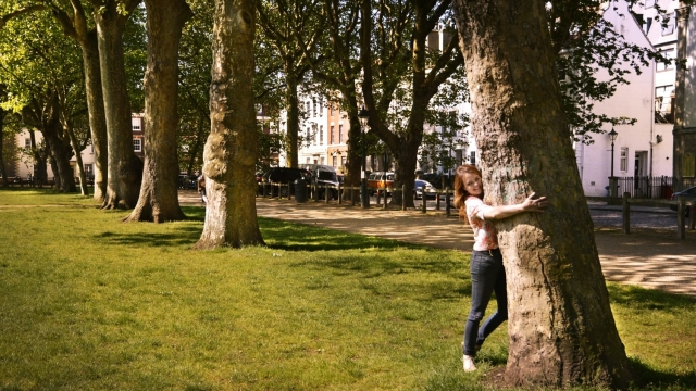 Tree-hugging in Bristol (Photo: Canopy and Stars)