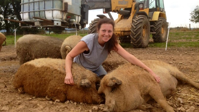 Rare pig farmer Lisa Hodgson says she has to drive her tractor across a field to send emails. (Photo: Lisa Hodgson)