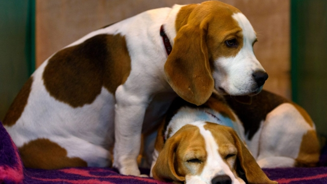Pets such as dogs helped provide a sense of routine (Photo: Getty)