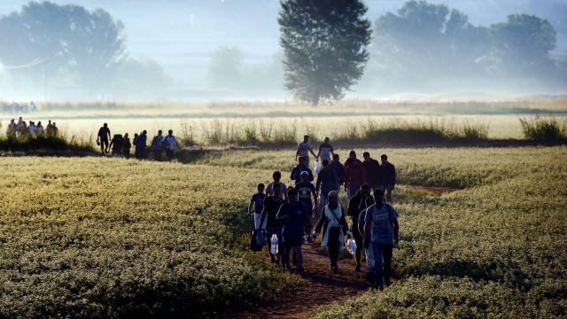 Syrian refugees and migrants walk in a field to cross the border between Greece and F.Y.R. of Macedonia on August 29, 2015. Photo: ARIS MESSINIS/ AFP/Getty