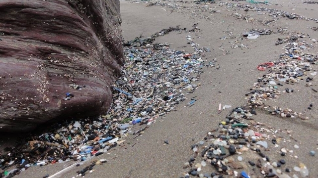 Tregantle beach where 35 bags of micoplastics were collected at on one day in May 2017 (Photo: SWNS)