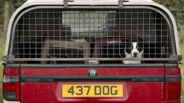 Custom licence plates are under close scrutiny (Photo: Getty)