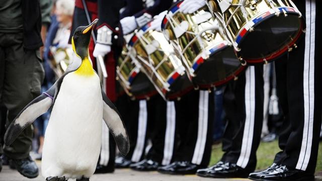 edinburgh penguin parade