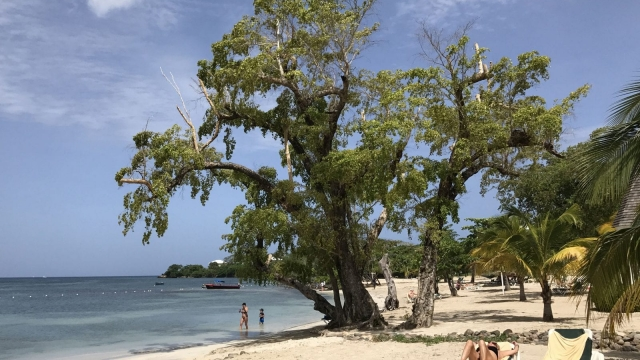 Last-minute flights to Jamaica are available for under £300 (Photo: AFP/Getty Images)
