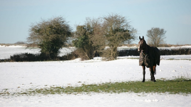 A horse stands on a patch of grass that is clear from snow on Thursday. (Photo by Matt Cardy/Getty Images)