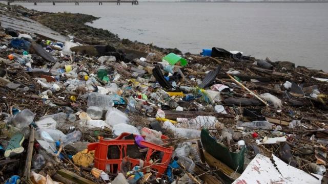 Plastic cotton buds account for 10 per cent of marine debris in European seas (Photo: Getty)