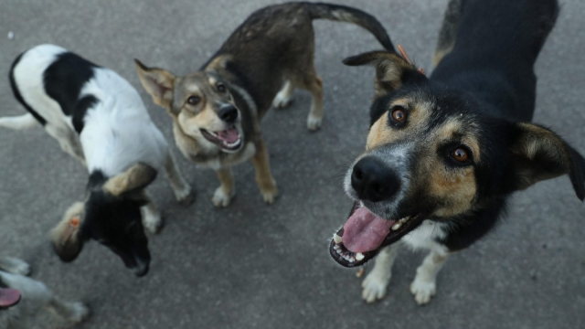 Dog owners warned about taking their pets abroad (Getty)