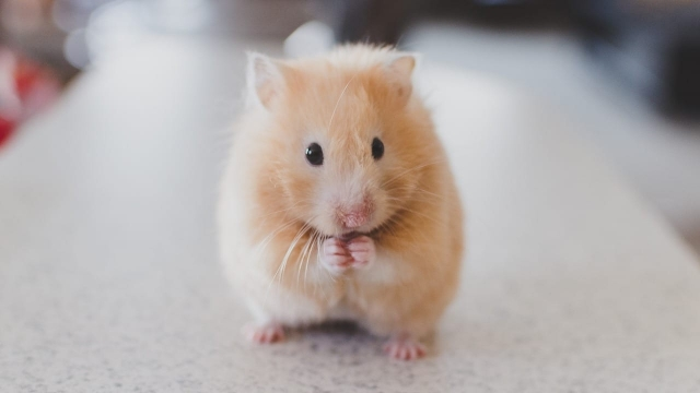 the hamster owner said that merely cleaning its cage and feeding the animal gave her a purpose.