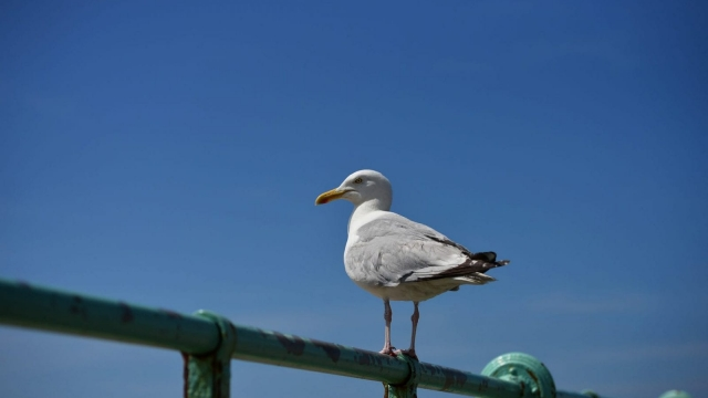 Teenagers lured seagulls into the path of cars