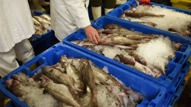 Fishing rights have been one of the most controversial parts of the Brexit transition deal (Photo: Getty)