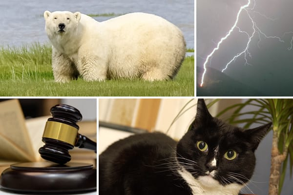 Polar bears, thunderstorms, cats and judges feature in these stories - but which are real and which are hoaxes?