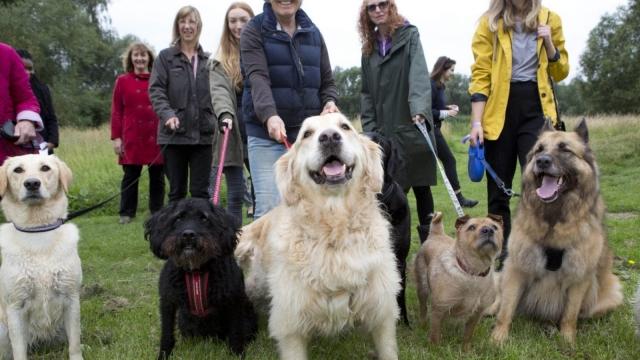 Melton residents and their pets celebrate the opening of a new dog activity trail in Melton Country Park as part of the town's pet-friendly campaign