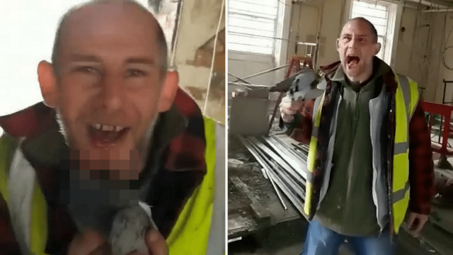 The RSPCA are looking for this builder who bit the head off a live pigeon