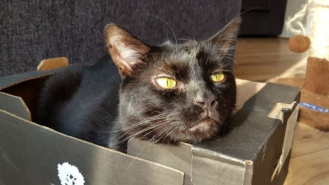 Megatron the cat was injured by his own collar (Photo: JPress)