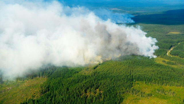 Some 50 wildfires are raging in the Swedish Arctic Circle. (Photo credit: MAJA SUSLIN/AFP/Getty Images)