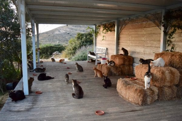 For some, getting paid to look after cats whilst living on an idyllic Greek island is a dream job (Photo: God's Little People Cat Rescue)