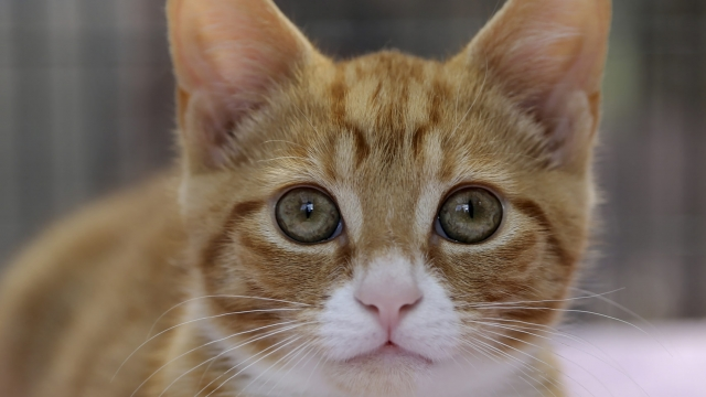 Cat owners escaping domestic abuse have praised the project, saying it gave them 'peace of mind' (Photo for illustrative purposes only: Cats Protection Kieron Adams)