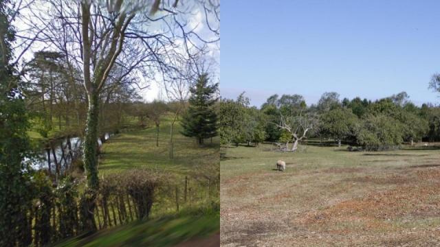 Tenterden trees