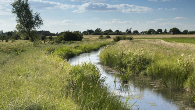 Summer at Wicken Fen Nature Reserve, Cambridgeshire, East of England.