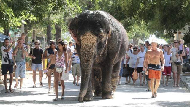 An elephant walks with tourists