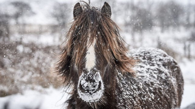"""Horses are covered in snow on the hills surrounding Merthyr Tydfil in Wales, as the wintry snap dubbed the """"mini beast from the east"""" gripped the UK earlier this year. (Photo: Ben Birchall/PA Wire)"""