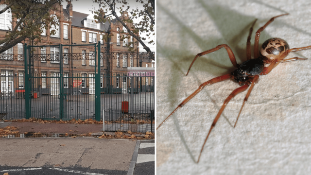 Star Primary in Newham is one of the schools affected by the spider outbreak