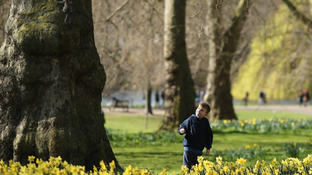Climbing a tree or making a den can be good for wellbeing (Photo: Getty Images)