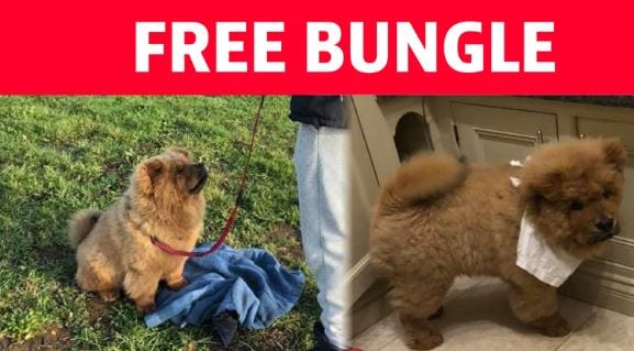 Bungle has been freed from police custody. (Photo: Change.org screenshot)
