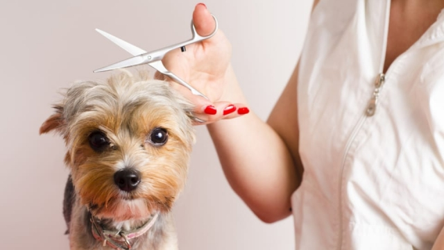 A pet groomer can make £1,024.80 before tax per week (Photo: Shutterstock)