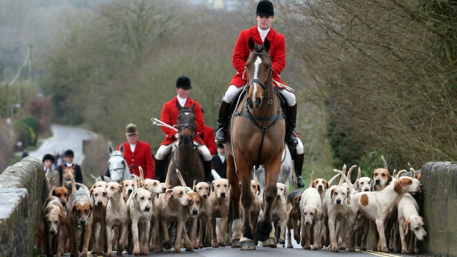 Boxing Day hunts are one of the most enduring tradition around the date (Getty Images)