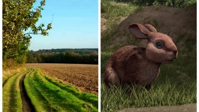 Watership Down- Sandleford Down which was the inspiration a for top novel is under threat from being turned into 1,500 homes (Photo: SWNS/BBC)