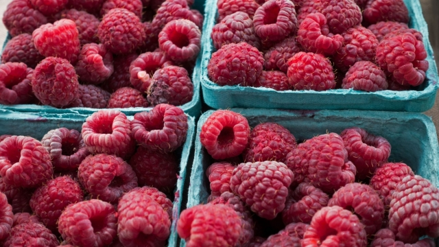 Norovirus was found in one in every 27 punnets of raspberries (Photo: Paul J. Richards/AFP/Getty Images)