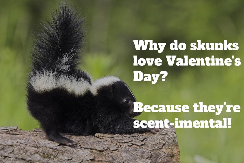 Article thumbnail: valentines jokes pullquote