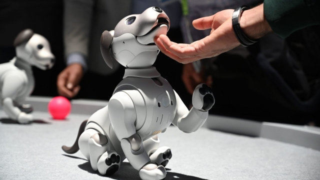 Attendees interact with the AIBO robotic companion dog at the Sony booth during CES 2019 consumer electronics show, on January 10, 2019 at the Las Vegas Convention Center in Las Vegas, Nevada. - AIBO has life-like movements and a unique personality which develops over time through interaction with people and it learns through positive and negative reinforcement. AIBO costs just under USD $3,000. (Photo by Robyn Beck / AFP) (Photo credit should read ROBYN BECK/AFP/Getty Images)