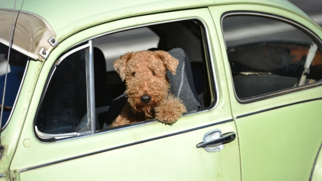 Many UK pet owners enjoy taking their animal companions along with them on their summer holidays (Photo: Getty Images)