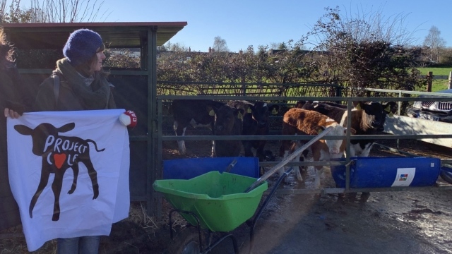 A Project Calf campaigner on a farm visit (Photo: Project Calf)