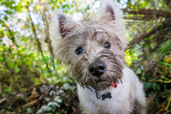 Pet owners are being urged to be particularly cautious after a dog recently fell ill with Alabama Rot (Photo: Shutterstock)