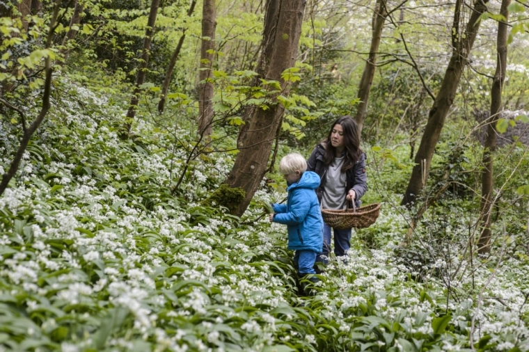 Family Foraging by David Hamilton (28th April 2018)