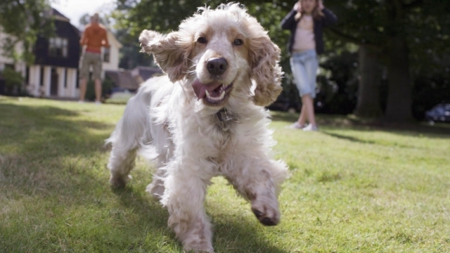 A dog runs in the garden. (Photo: Getty)