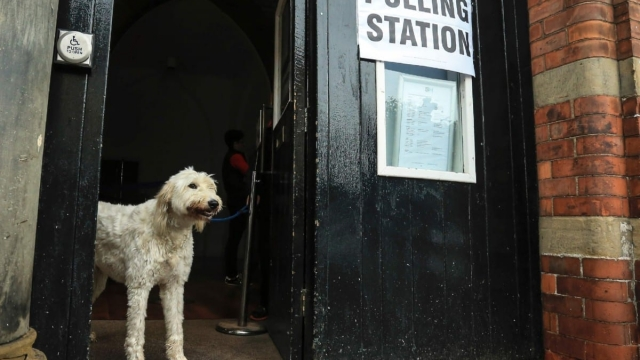 Article thumbnail: A dog is pictured at a polling station in Howden, northeast England (Photo: AFP/ Lindsey Parnaby/Getty Images