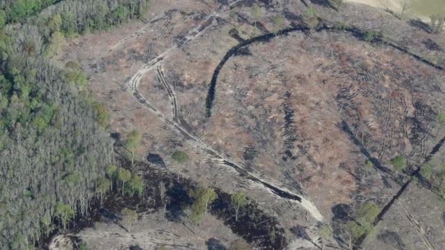 deforestation biomass energy