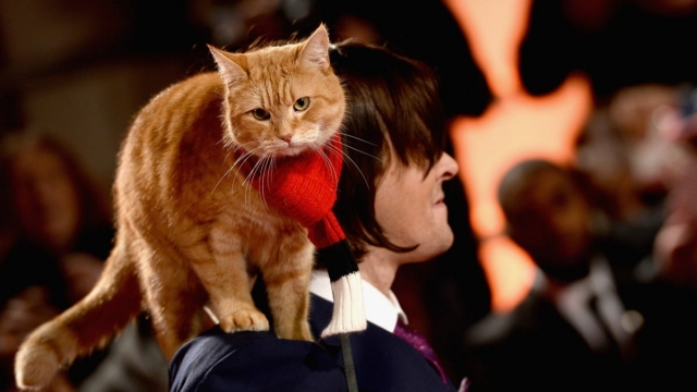 James Bowen and Bob the street cat will be appearing at CatFest (Jeff Spicer/Getty Images)