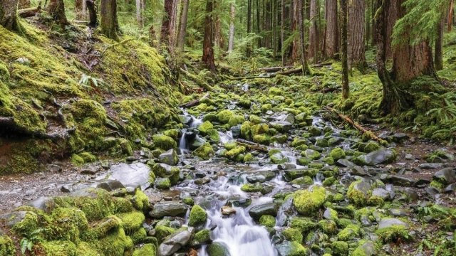 The Hoh rainforest, a 'woodland cathedral' on Washington state's Olympic peninsula (Photo: Chris Sayer)