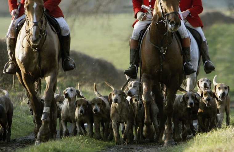 Fox hunting with a real fox was banned in 2005 (Photo: Getty)
